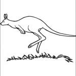 Kanguru 15