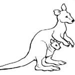 Kanguru 2