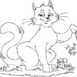 Katze 14