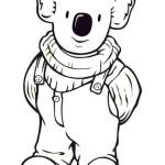 Koala 11