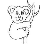 Koala 9