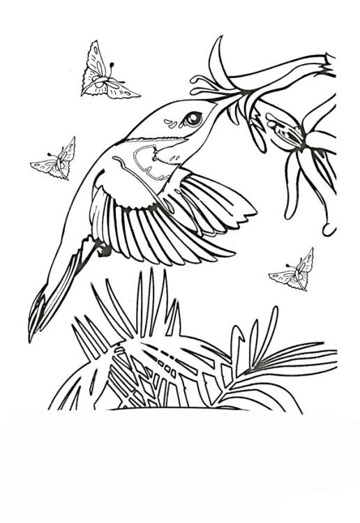 ausmalbilder für kinder kolibri 1