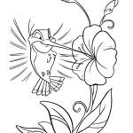 Kolibri 8