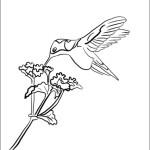 Kolibri 9