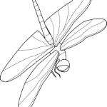 Libelle 10