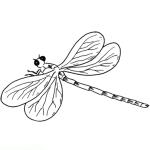 Libelle 4