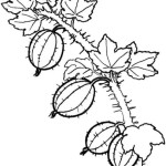 Obst Fruchte 2
