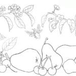 Obst Fruchte 8