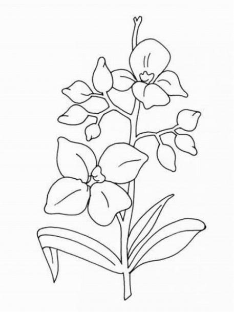 Orchidee Ausmalbilder Malvorlagen kostenlos ausdrucken