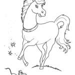 Pferd 11