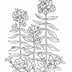 Pflanzen 11