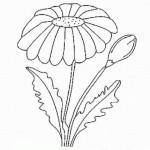 Pflanzen 15