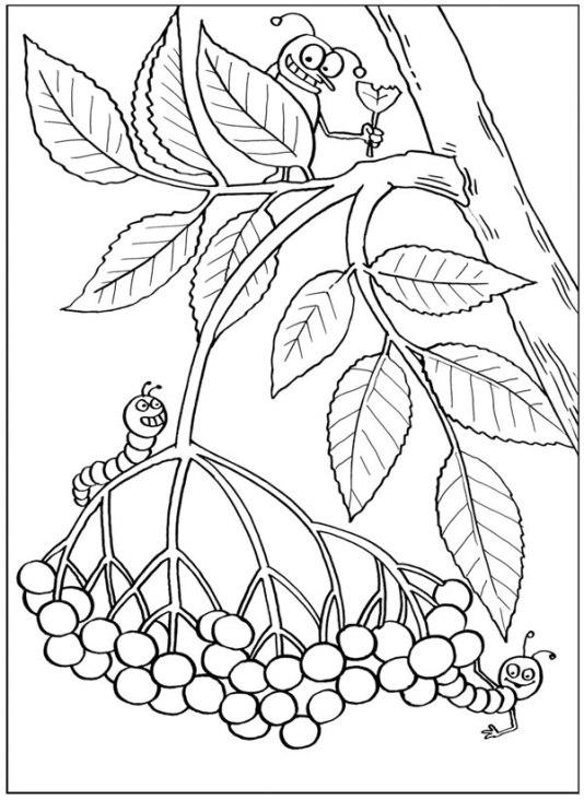ausmalbilder für kinder pflanzen 3