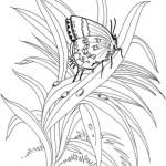 Pflanzen 5