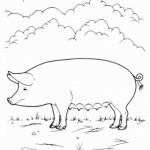 Schwein 3