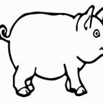 Schwein 4
