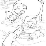 Schwein 7