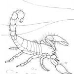 Skorpion 4