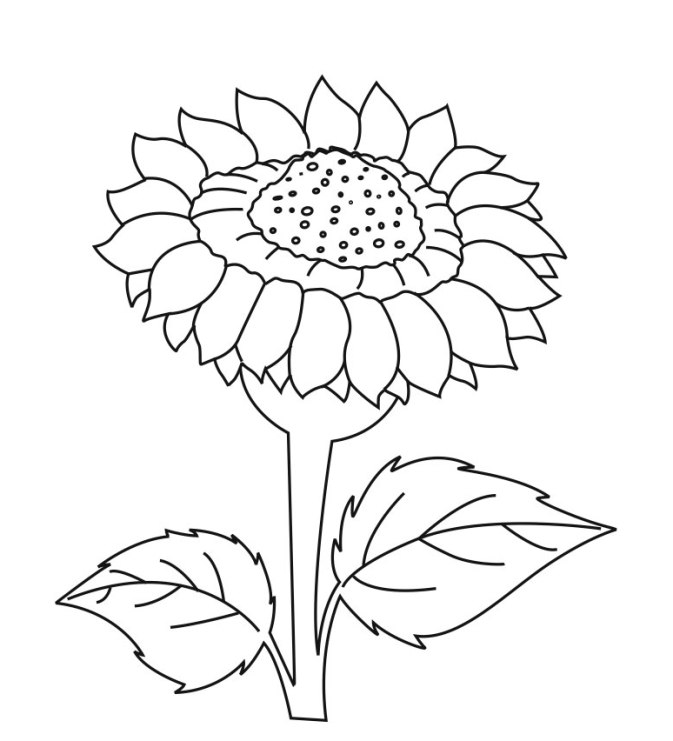 coloring pages sunflowers - photo#28