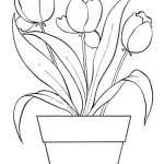 Tulpe 7