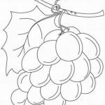 Weintraube 10