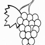 Weintraube 4