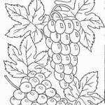 Weintraube 8