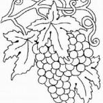 Weintraube 9