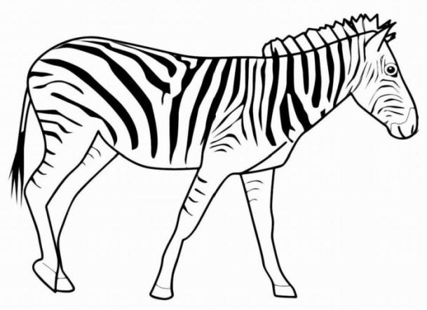 ausmalbilder für kinder zebra 3