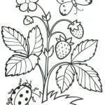 erdbeere 11