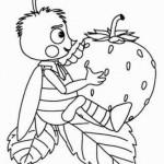 erdbeere 14