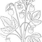 erdbeere 7